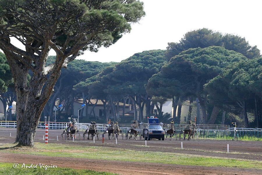 Courses hippiques à l'hippodrome d'Hyères à Hyères - 9