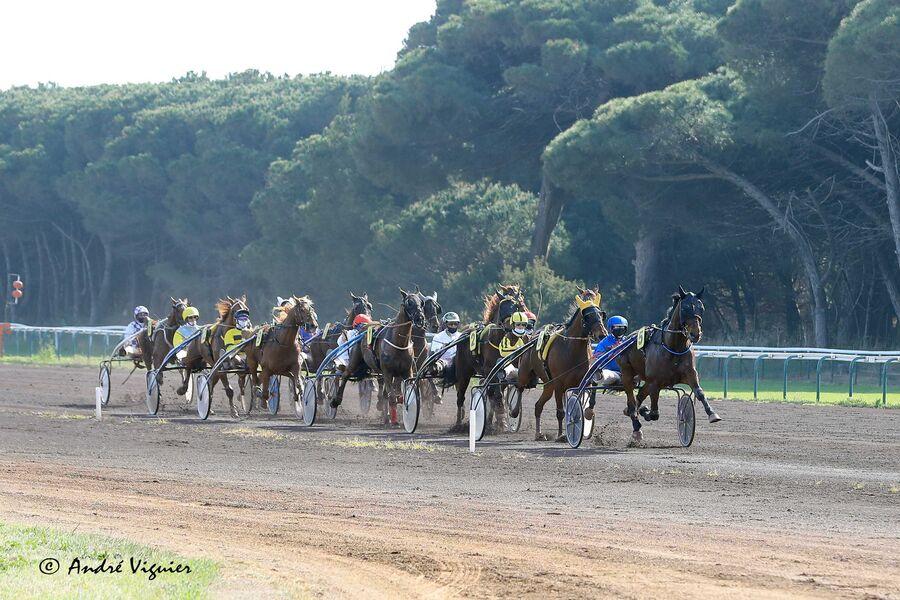 Courses hippiques à l'hippodrome d'Hyères à Hyères - 11