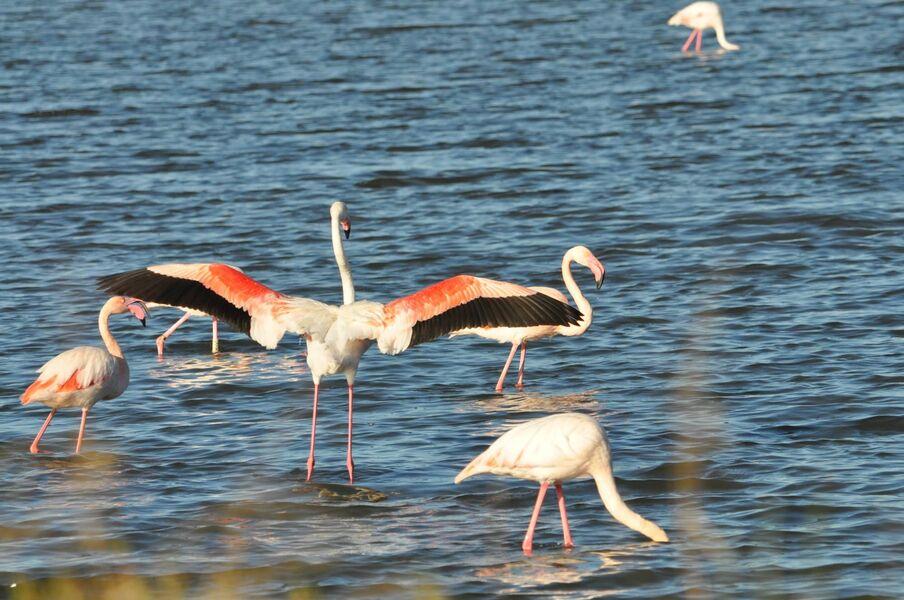Observation des oiseaux au Salin des Pesquiers avec la LPO à Hyères - 0