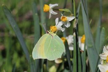 Conférence Nature – Les papillons à Hyères - 0