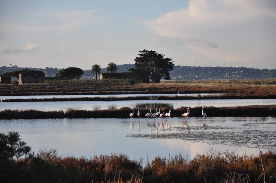 Observation des oiseaux au Salin des Pesquiers avec la LPO à Hyères - 3
