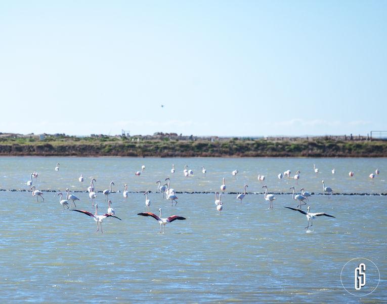 Observation des oiseaux au Salin des Pesquiers avec la LPO à Hyères - 5