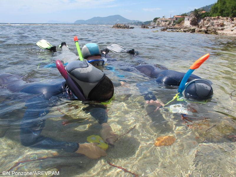 Sentier marin archéologique d'Olbia, balade aquatique accompagnée à Hyères - 0