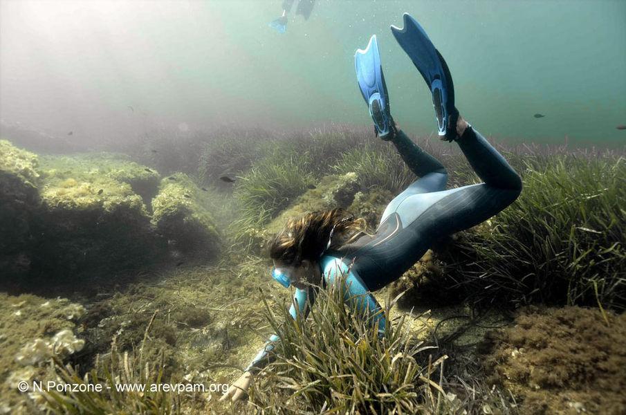 Sentier marin archéologique d'Olbia, balade aquatique accompagnée à Hyères - 5