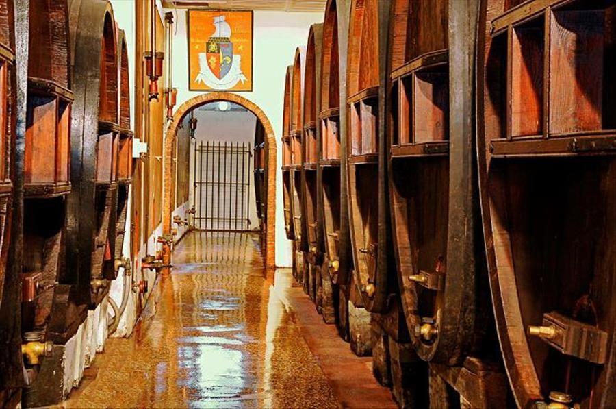 Découverte viticole: domaine Clos Cibonne : visite commentée à Le Pradet - 0