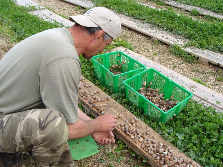 Visite, en matinée, d'une exploitation d'escargots à Le Pradet - 3