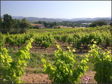 L'expérience viticole: Visite du Domaine de la Navicelle : domaine en Biodynamie à Le Pradet - 1