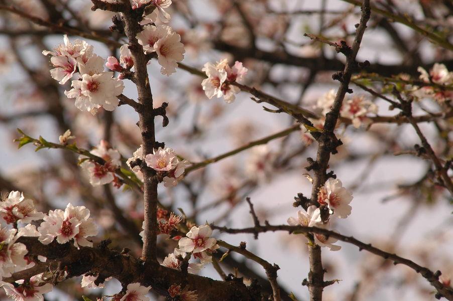 Fête de la fleur à Hyères - 1