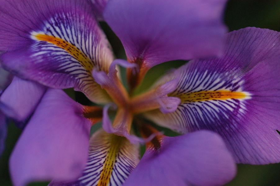 Fête de la fleur à Hyères - 5