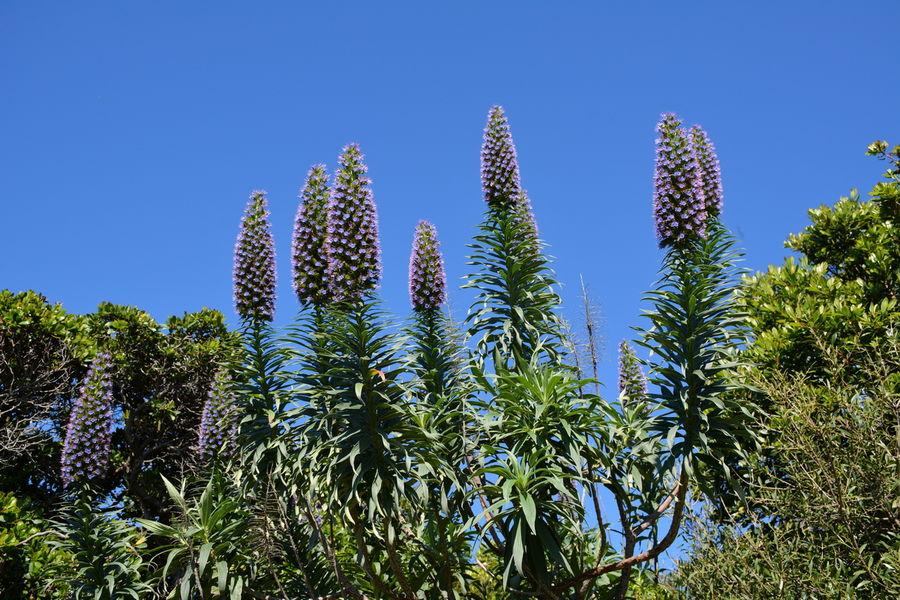 Rendez-vous aux jardins – Île du Levant à Hyères - 5