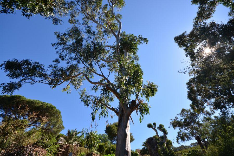 Rendez-vous aux jardins – Île du Levant à Hyères - 6