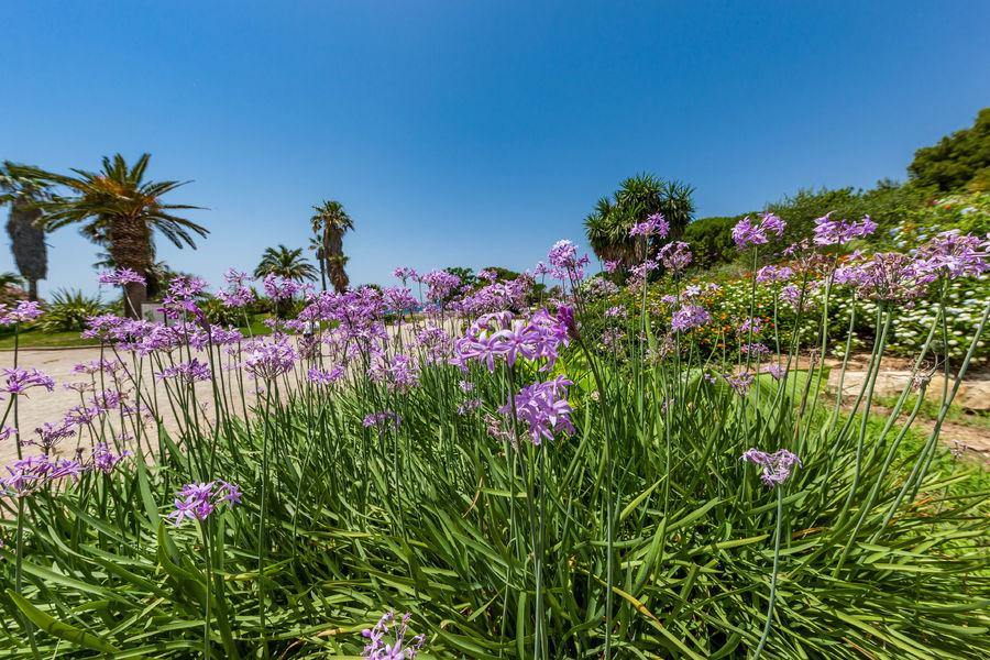 Visite botanique du parc de la Méditerranée à Six-Fours-les-Plages - 0