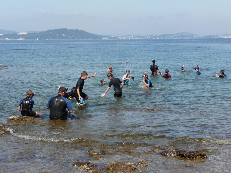 Balade aquatique : A la découverte de la faune et la flore marine à Le Pradet - 0