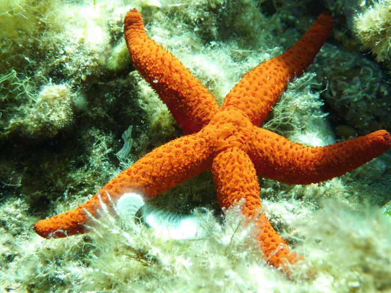 Balade aquatique : A la découverte de la faune et la flore marine à Le Pradet - 1