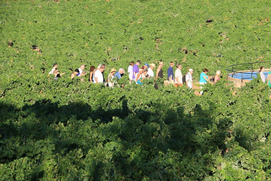 •Visite Oenoludique d'un domaine viticole ( domaine de la Navicelle) en Biodynamie à Le Pradet - 0