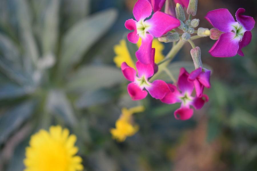 Balade à la découverte de la faune et la flore sur l'île de Porquerolles à Hyères - 0