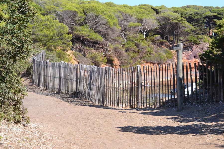 Porquerolles hors des sentiers battus (visite guidée) à Hyères - 5