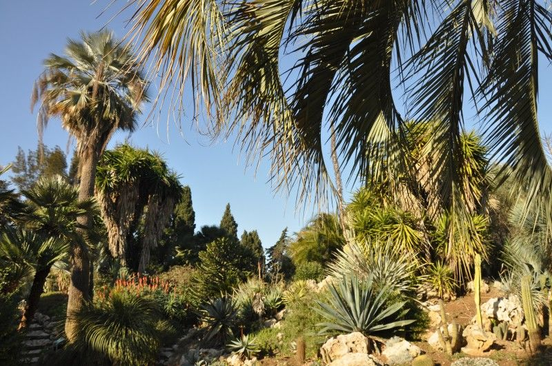 Petits contes au jardin (visite guidée spécial enfants) à Hyères - 11