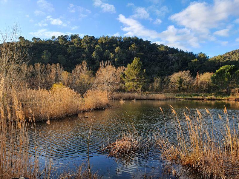 Sorties nature aux étangs de Sauvebonne à Hyères - 1