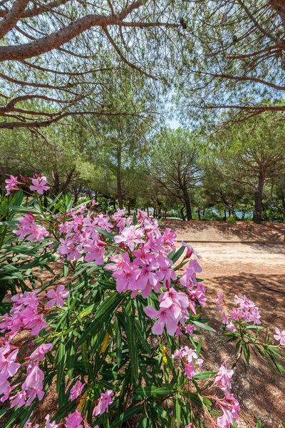 Visite botanique «Dans la peau d'un herboriste» à Six-Fours-les-Plages - 0