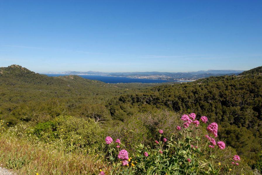 Randonnée «marche Nordique dans la Forêt du Cap Sicié» à Six-Fours-les-Plages - 0