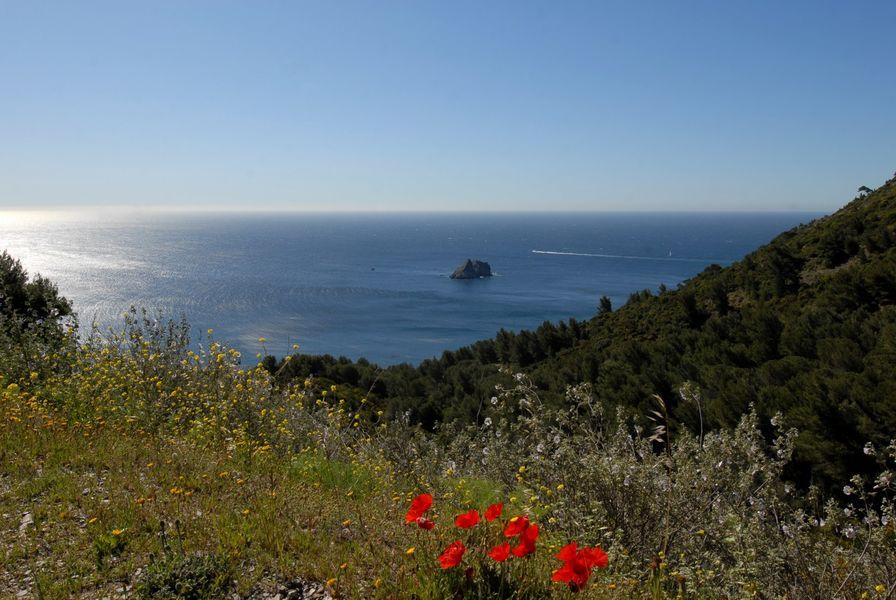 Randonnée «marche Nordique dans la Forêt du Cap Sicié» à Six-Fours-les-Plages - 1