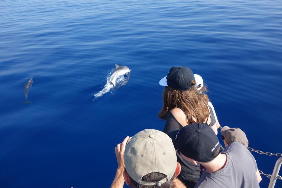 Au large à la rencontre des dauphins et des mammifères marins à Hyères - 1