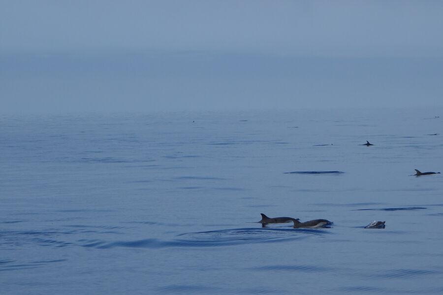 Au large à la rencontre des dauphins et des mammifères marins à Hyères - 2