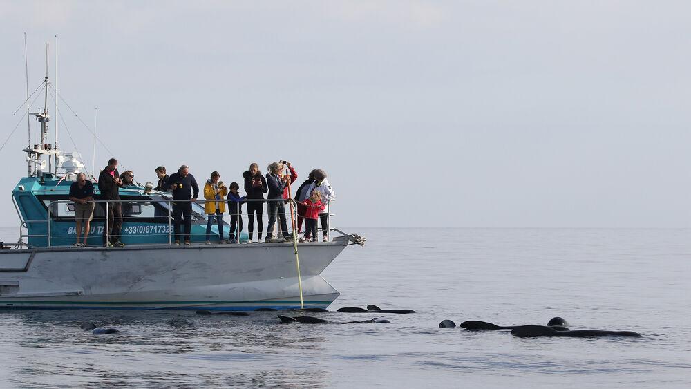 Au large à la rencontre des dauphins et des mammifères marins à Hyères - 3
