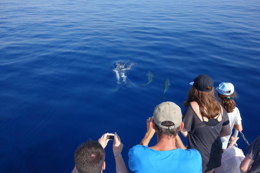 Au large à la rencontre des dauphins et des mammifères marins à Hyères - 4