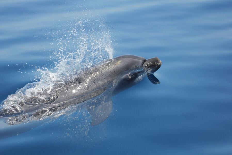 Au large à la rencontre des dauphins et des mammifères marins à Hyères - 0