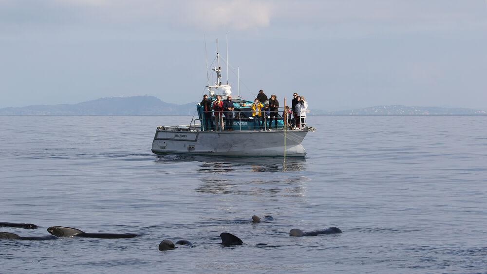 Au large à la rencontre des dauphins et des mammifères marins à Hyères - 5