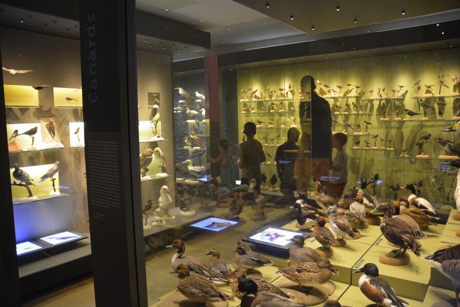 Visite du Muséum et du jardin du Las « À l'impromptu ! » à Toulon - 0