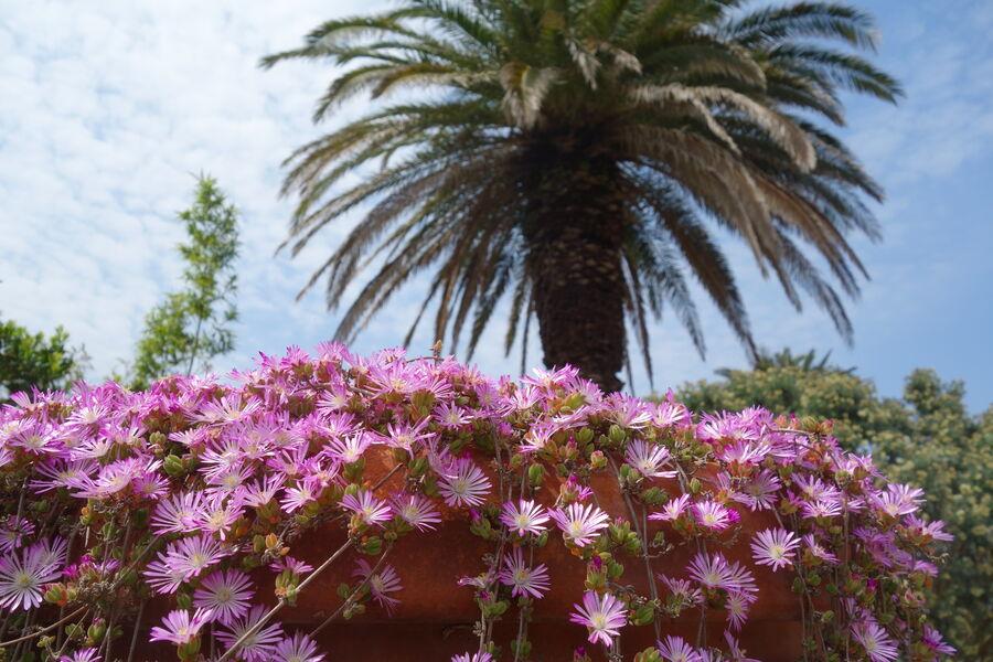 Jardin Emmanuel Lopez à Hyères - 11