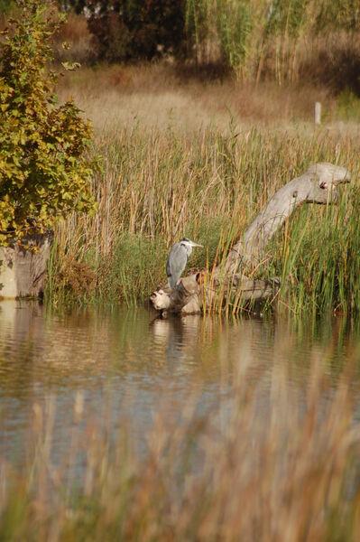 Visites découverte de l'Espace Nature: Focus sur les oiseaux à La Garde - 0