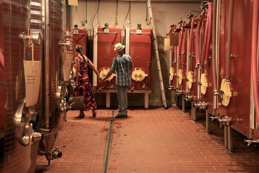 L'expérience viticole: Visite commentée du Domaine de la Navicelle : domaine en Biodynamie à Le Pradet - 0