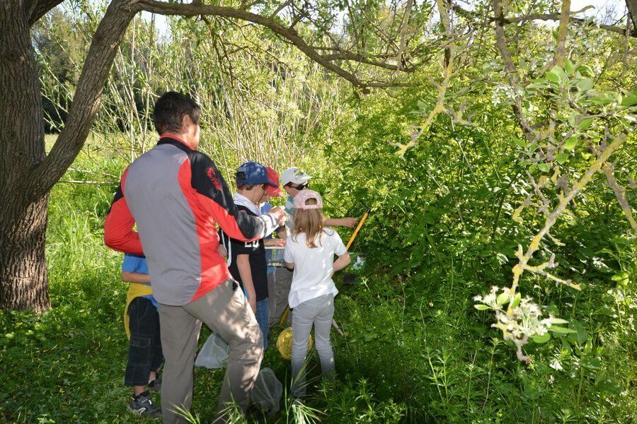Les petits explorateurs du maquis (visite guidée spécial enfants) à Hyères - 7