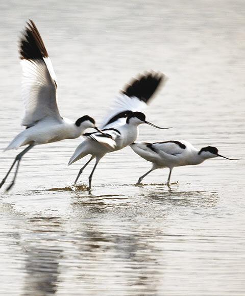 Observation des oiseaux aux Vieux Salins avec la LPO à Hyères - 4