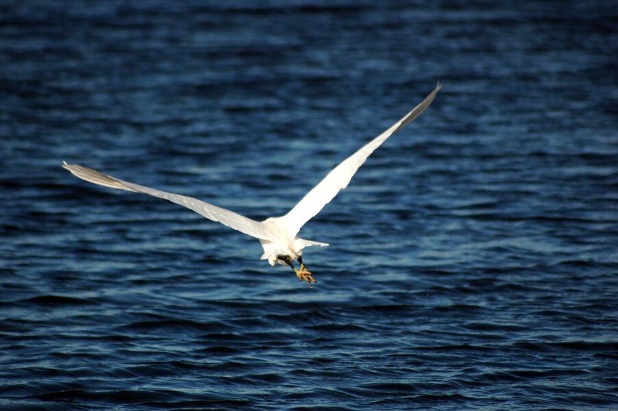 Observation des oiseaux aux Vieux Salins avec la LPO à Hyères - 5