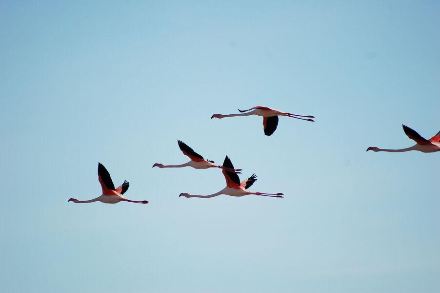 Observation des oiseaux aux Vieux Salins avec la LPO à Hyères - 7