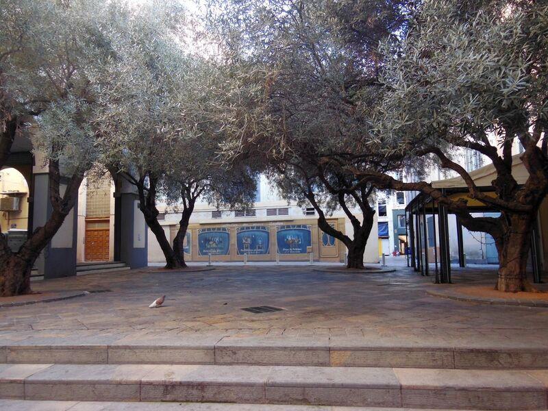 La nature dans la ville – Visite commentée à Toulon - 2