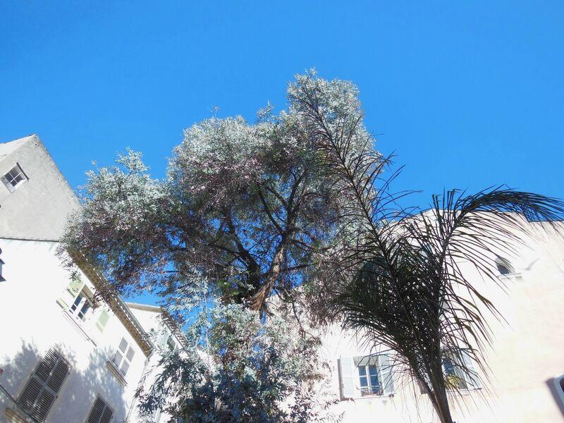 La nature dans la ville – Visite commentée à Toulon - 3
