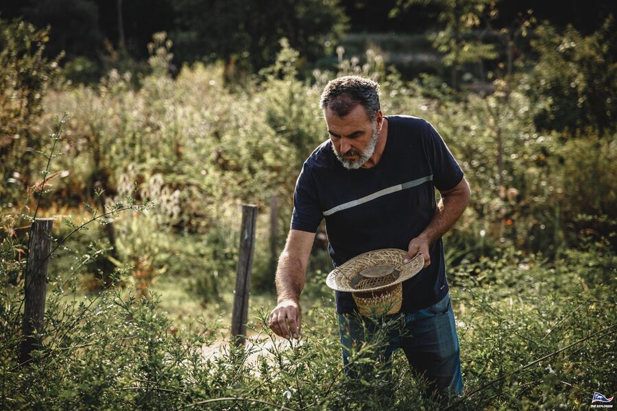 Plantes sauvages et vigne en Biodynamie. : balade nature commentée à La Crau - 4