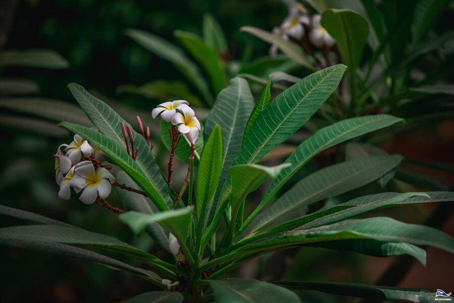 Plantes sauvages et vigne en Biodynamie. : balade nature commentée à La Crau - 3