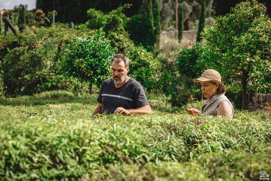 Plantes sauvages et vigne en Biodynamie. : balade nature commentée à La Crau - 5