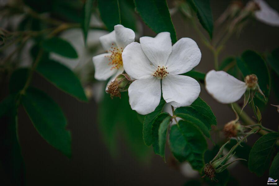 Plantes sauvages et vigne en Biodynamie. : balade nature commentée à La Crau - 7