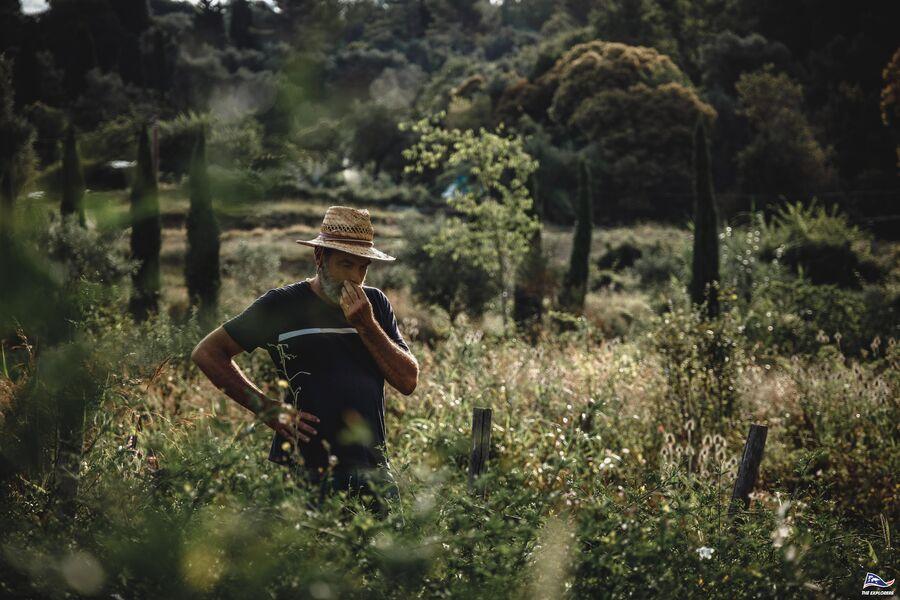 Plantes sauvages et vigne en Biodynamie. : balade nature commentée à La Crau - 0