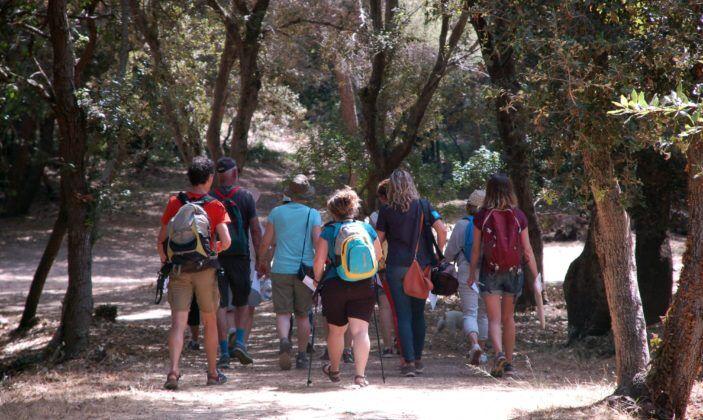 Visite en bain de forêt sur la presqu'île de Giens à Hyères - 0