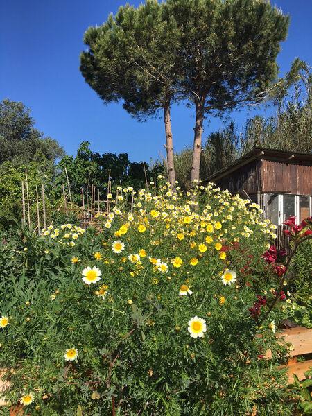 Balade botanique «A la découverte des plantes sauvages, comestibles et médicinales» à Hyères - 0