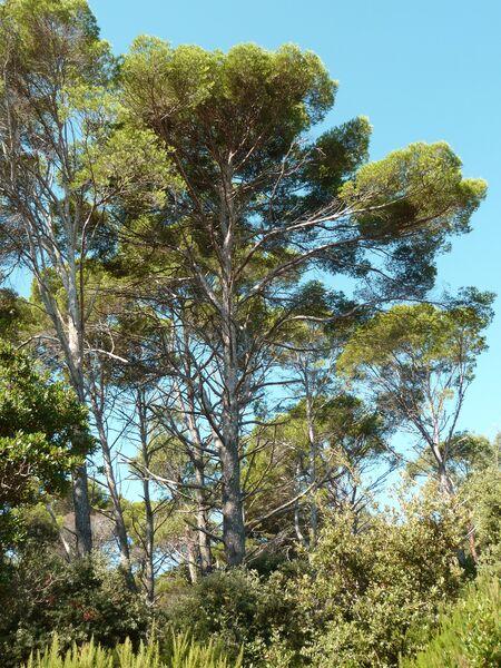 Point rencontre : Balade naturaliste et découverte sur l'île de Porquerolles à Hyères - 0